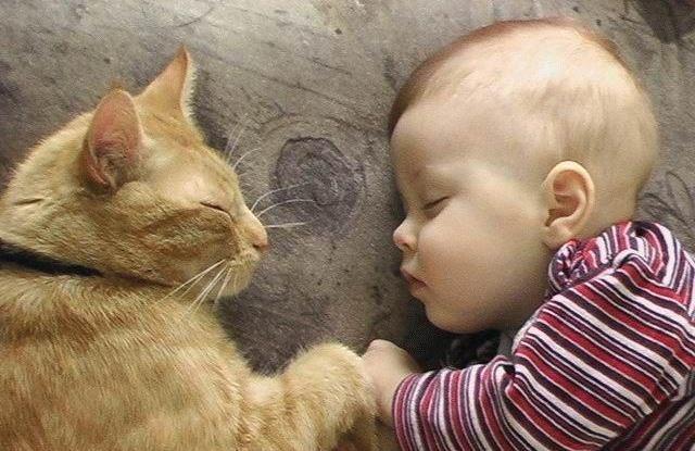 Фотографии с детей с котом
