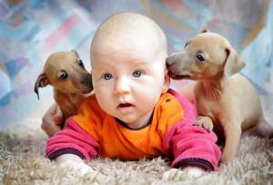 Аллергия на животных симптомы и лечение