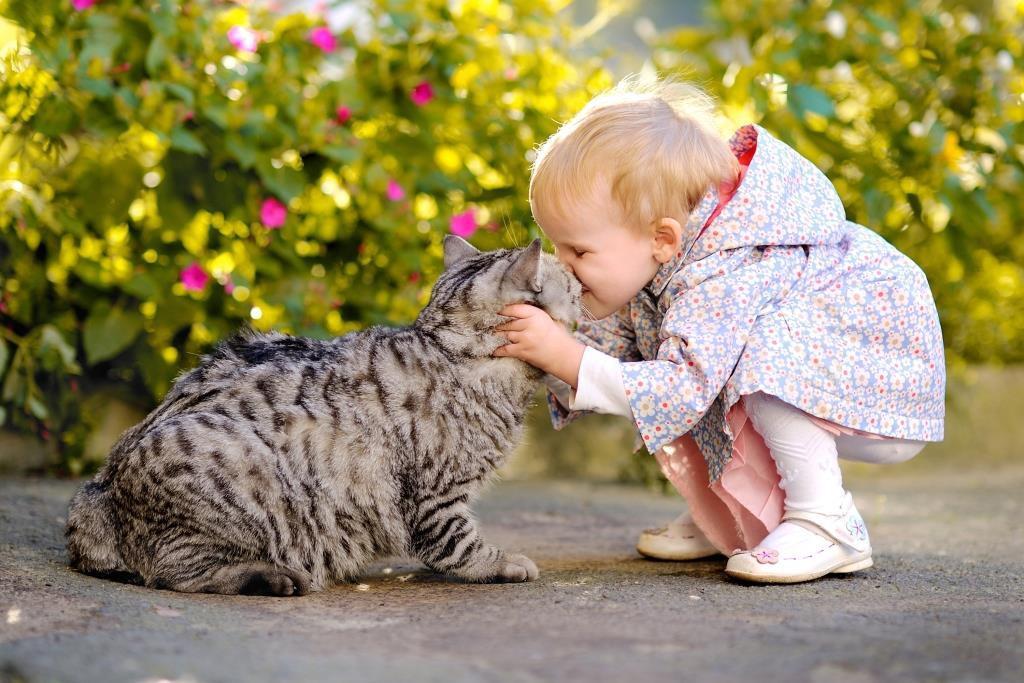У ребёнка аллергия на кота