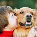 Собака как причина аллергии ребёнка
